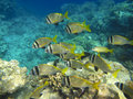 Shoal of tropical fish Royalty Free Stock Photos
