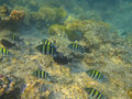 Shoal of tropical fish Royalty Free Stock Photography