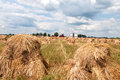 Shocked oats bundles of in a amish field with house and barn in the background Stock Photography