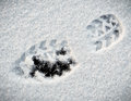 Shoeprint in snow on ice Stock Photography