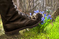 Shoes ruthlessly tramples flower
