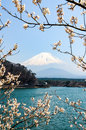 Shoji Lake, Mount Fuji, cherry blossom, Japan Royalty Free Stock Photo