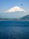 Shoji Lake, Mount Fuji, flying bird, Japan Royalty Free Stock Photo