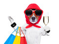 Shopaholic diva dog shopping like a pro holding a bunch of bags Stock Images