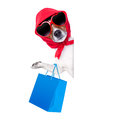 Shopaholic shopping diva dog holding a blue bag wearing sunglasses Royalty Free Stock Photos