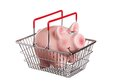 Shopping basket with piggy bank one in a red handles isolated on white Royalty Free Stock Image
