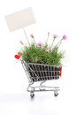 Shopping cart full of fresh herbs and flowers Royalty Free Stock Photo