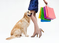 Shopping with dog girl in blue dress the and packages Royalty Free Stock Image