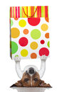 Shopping dog holding a bag lying upside down Royalty Free Stock Photography