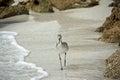 Shore bird Stock Image