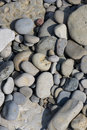 Shore Stone Stock Image