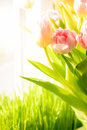 Shot of fresh pink tulips standing on windowsill closeup Stock Photo