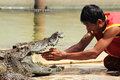 Show of crocodiles thailand samutprakan oct traditional for thailand th e trainer put hand into the jaws a crocodile on october Stock Photos