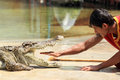 Show of crocodiles thailand samutprakan oct traditional for thailand th e trainer put hand into the jaws a crocodile on october Royalty Free Stock Photo