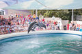 Show at the dolphinarium Stock Image