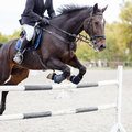 Show jumping close up image. Royalty Free Stock Photo