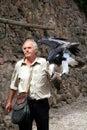 Show of the training of predatory birds. France Royalty Free Stock Photos