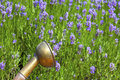 Shower head of a copper watering can in front lavender field in summer Stock Photo