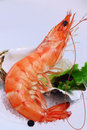 Shrimp appetiser close up Royalty Free Stock Photo