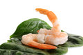 Shrimp close up image of shrimps and spinach leaves on white background Royalty Free Stock Photography