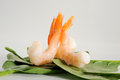 Shrimp close up image of with spinach leaves Stock Image