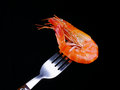 Shrimp on Fork Royalty Free Stock Photos