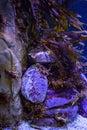 Shrimp hiding in stones in a tank at the aquarium Stock Photography
