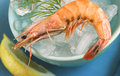 Shrimp on ice Royalty Free Stock Images