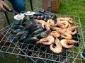 Shrimp and shell on bbq close up of in outdoor Royalty Free Stock Photos