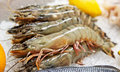 Shrimps on market stall Royalty Free Stock Image