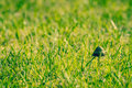 Shroom in green grass small fresh Stock Images