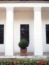 Shrub and columns white wall Stock Image