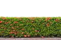 Shrub fence Stock Image