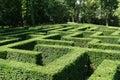 Shrub maze Royalty Free Stock Photo