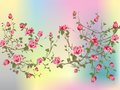 Shrub rose composition of spring on a colored background Stock Image
