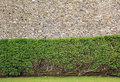 A shrubbery seen against a rock wall in dover uk Royalty Free Stock Photo