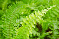 Shrubs fern background green closeup Royalty Free Stock Images