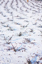 Shrubs in snow around the winter Royalty Free Stock Images