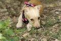 Shy Dog Royalty Free Stock Photo