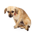 Shy Rescue Dog Royalty Free Stock Photo