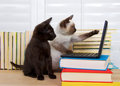 Siamese and black kitten with computer Royalty Free Stock Photo