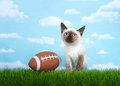 Siamese kitten with football in grass Royalty Free Stock Photo