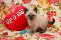 Siamese kitten with heart Royalty Free Stock Photo