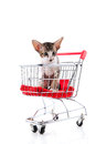Siamese kitten in shopping cart little isolated over white background Stock Photos