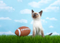 Siamese kitten sitting on grass looking up at the sky Royalty Free Stock Photo