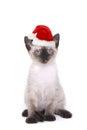 Siamese Kitten on White With Santa Hat