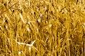 Siberian nature beautiful autumn grass yellow screensaver background Stock Image