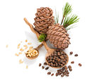 Siberian pine nuts and cones Royalty Free Stock Photo