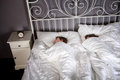 Siblings in bed Royalty Free Stock Photography