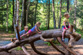 Siblings climbing on a big log in a forest Royalty Free Stock Photo